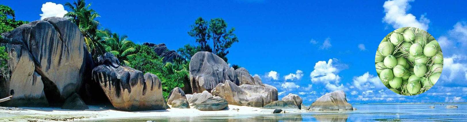 hình nền dừa với biển xanh