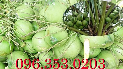 Chợ đầu mối bán dừa tươi - Tìm nguồn dừa tươi số lượng lớn