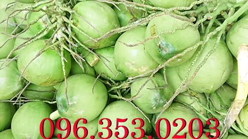 Vựa dừa tươi lớn nhất Bến Tre Miền Tây