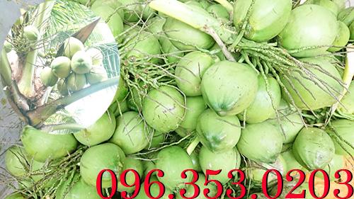 Cần mua dừa tươi số lượng lớn về bán sỉ