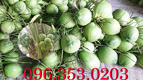 nơi nào nhiều dừa tươi nhất Việt Nam?
